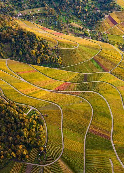 Wijngaarden bij Stuttgart van Werner Dieterich