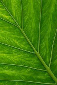 Leaf van
