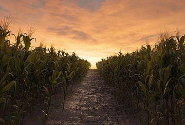 Een gangpad tussen twee korenvelden in de avondzon van Besa Art