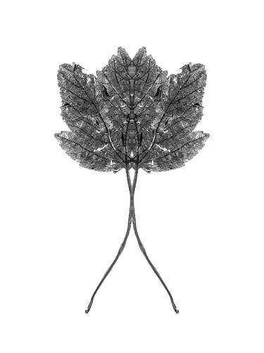 Symmetrisch plantenblad
