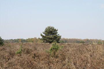 Eenzame boom op de heide van Spijks PhotoGraphics