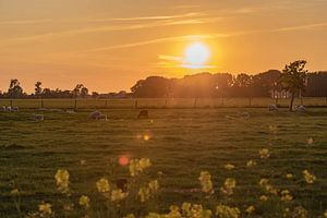 zonsondergang over de schapenwei