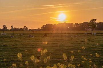 zonsondergang over de schapenwei van Tania Perneel