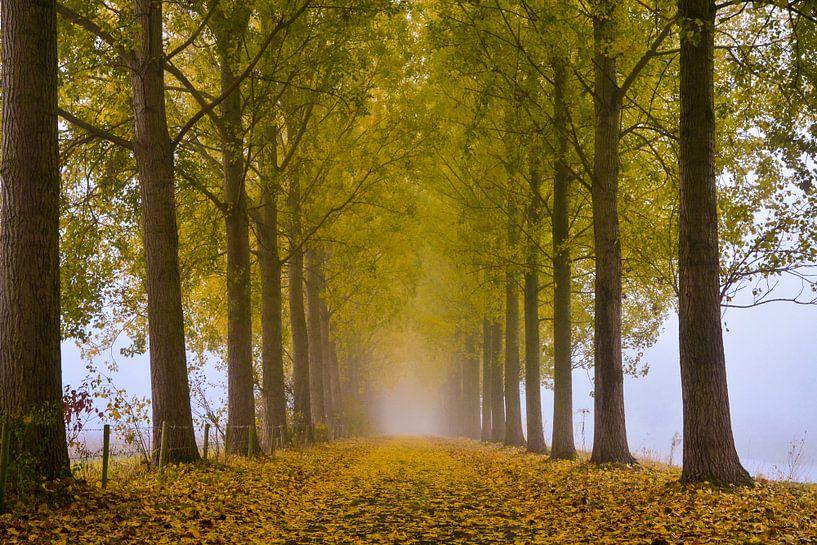 Towards the light van Jaco Verheul