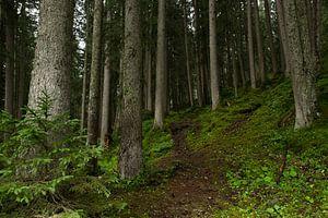 Wandelen door het Zwitsers woud van