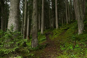 Wandelen door het Zwitsers woud