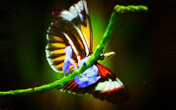 Butterfly van King Photography