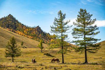 Mongolië van