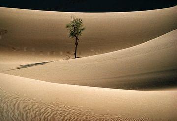 Einsamer Baum in der Wüste Sahara von Frans Lemmens