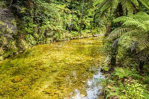 Heldere beek in Abel Tasman Nationaal Park, Nieuw Zeeland van