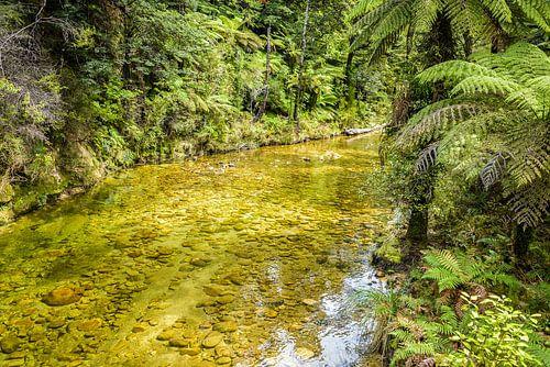 Heldere beek in Abel Tasman Nationaal Park, Nieuw Zeeland
