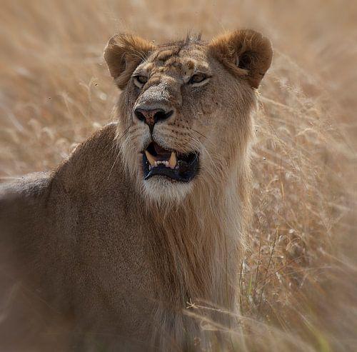 Lion van