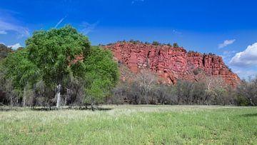 Red Rock State Park, Arizona, USA van de Roos Fotografie