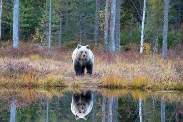 Bruine beer van Merijn Loch