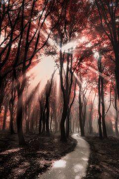 Red glow sur