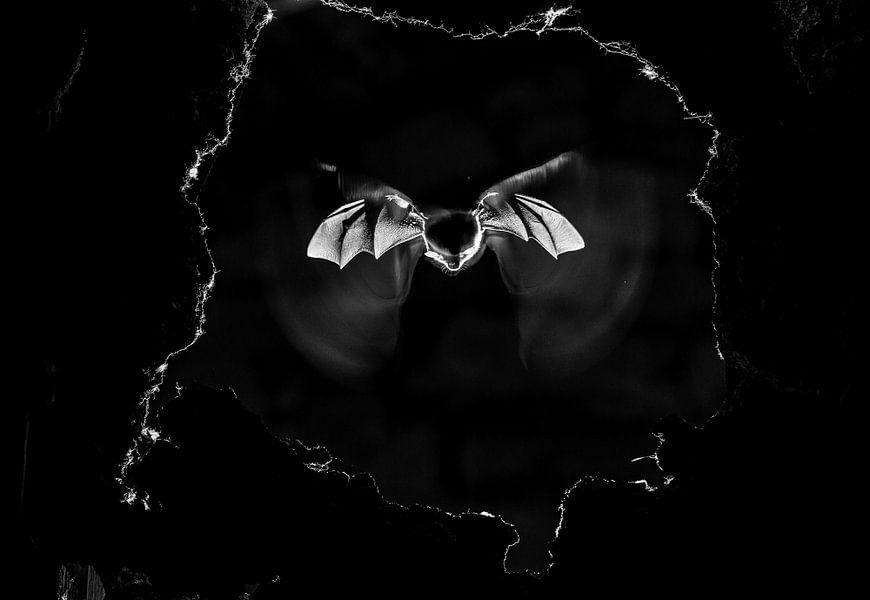 Bat van Dimas Serneguet Belda