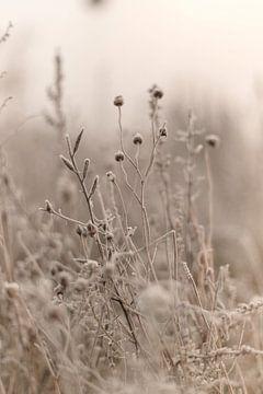 Gefrorene Blumen von Sandra Koppenhöfer