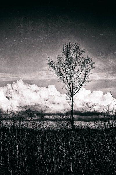 Landscape III van Rene Kuipers