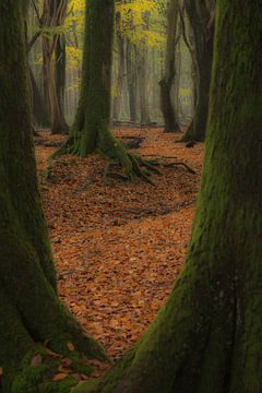 Doorkijkje naar bijzondere boom van Michel Knikker