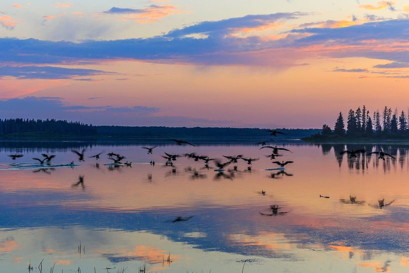Elk Island National Park van Hans Jansen - Lynxs Photography