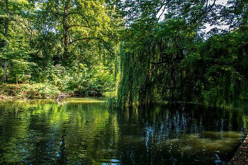 Utrecht-Julianapark met bladertakken in het water