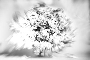Highkey rotating Tulips van Roland de Zeeuw fotografie