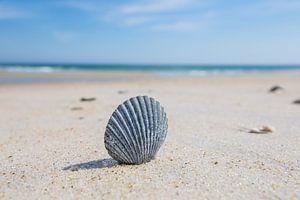 Schelp op het strand