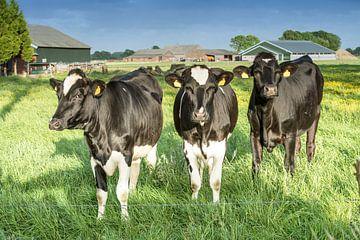 Koeien in een weiland van Egon Zitter