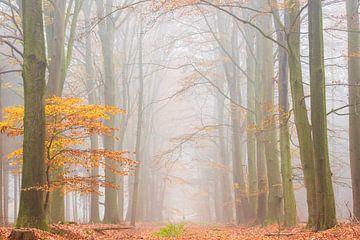 Matin d'automne brumeux dans une forêt de hêtres sur Francis Dost