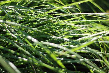 Nat gras van Maarten Borsje