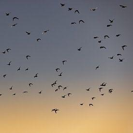Vogels vliegen tijdens de zonsopkomst 2 van Percy's fotografie