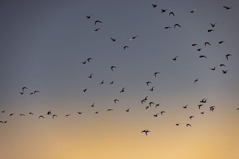 Vögel fliegen bei Sonnenaufgang 2 von Percy's fotografie