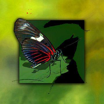Schmetterling   |   Red Mormon von Dirk H. Wendt
