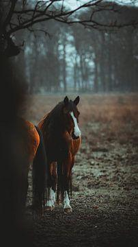 Ein schönes Wildpferd von AciPhotography
