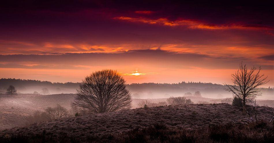 Mistige zonsopkomst Veluwezoom van Martijn van Steenbergen