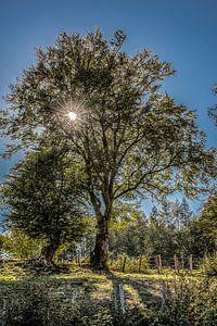 De zon schijnt door een boom in het tegenlicht