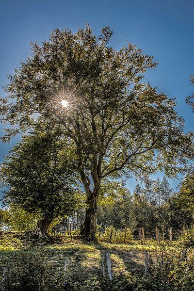 De zon schijnt door een boom in het tegenlicht van Harrie Muis