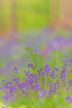 Blauglockenblumen, die im Frühling auf dem Waldboden wachsen von Sjoerd van der Wal