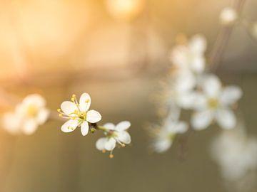 Blüte von Diane van Veen