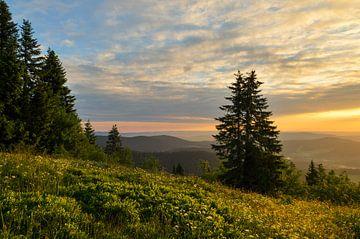 Schöne goldene Licht auf dem Feldberg. von Jos Pannekoek
