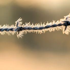 Stacheldraht mit Eiskristallen von Marcel Derweduwen