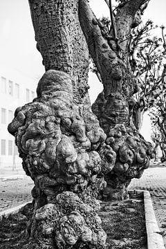 Knoestige bomen