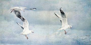Zeemeeuwen tijdens de vlucht van Claudia Moeckel