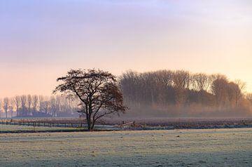 koude ochtend op het platteland van Tania Perneel