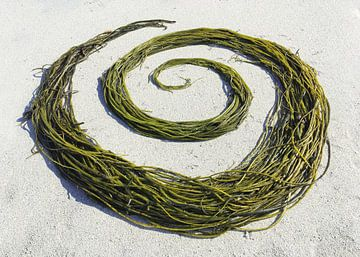 Seaweed Swirl van Mies Heerma
