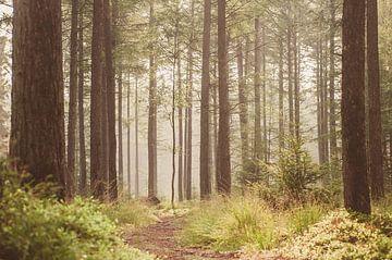 Herfst Planken Wambuis van Nancy van Verseveld