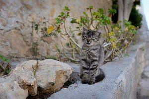 Straat kitten in Griekenland van