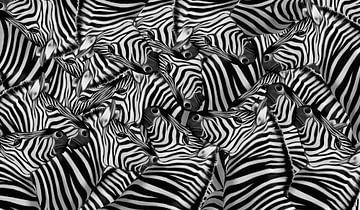 zebra's van Marion Tenbergen