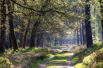 Wald im Frühjahr von Evert Jan Kip