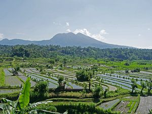 Reisfelder in Bali, Indonesien von Liefde voor Reizen